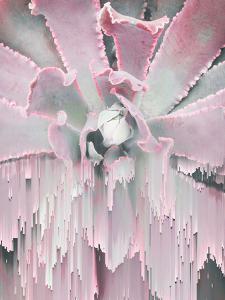 Succulent Glitches by Emanuela Carratoni