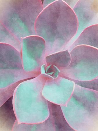Sweet Succulent by Emanuela Carratoni