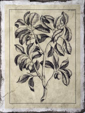 https://imgc.artprintimages.com/img/print/embellished-antique-foliage-i_u-l-f4ewg30.jpg?p=0