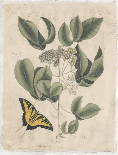 Embellished Catesby Butterfly & Botanical II-Mark Catesby-Art Print