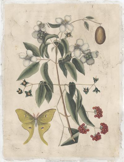 Embellished Catesby Butterfly & Botanical III-Mark Catesby-Art Print