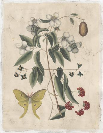https://imgc.artprintimages.com/img/print/embellished-catesby-butterfly-botanical-iii_u-l-f8fai90.jpg?p=0