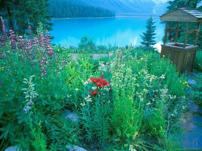 Emerald Lake, Yoho National Park, British Columbia-Rob Tilley-Photographic Print
