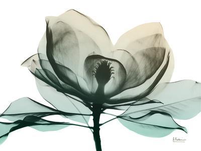 https://imgc.artprintimages.com/img/print/emerald-magnolia-2_u-l-q1bc3f80.jpg?p=0