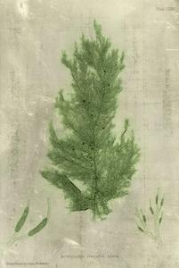 Emerald Seaweed I