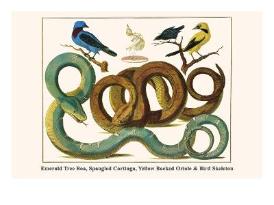 Emerald Tree Boa, Spangled Cortinga, Yellow Backed Oriole and Bird Skeleton-Albertus Seba-Art Print