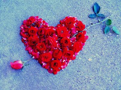 Rose Pierces Heart of Roses on Blue Backdrop