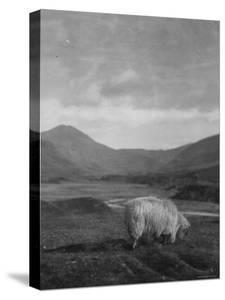 Spittal of Glenshee by Emil Otto Hoppé
