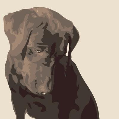 Chocolate Labrador