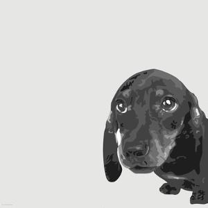 Dachshund by Emily Burrowes