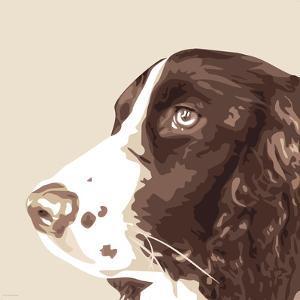 Springer Spaniel by Emily Burrowes