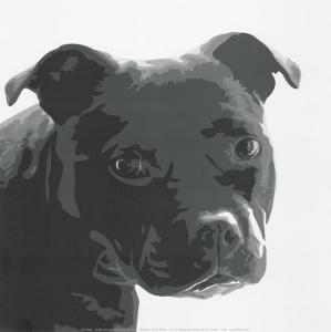 Staffordshire Bull by Emily Burrowes