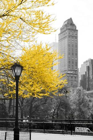 Central Park with Yellow Tree