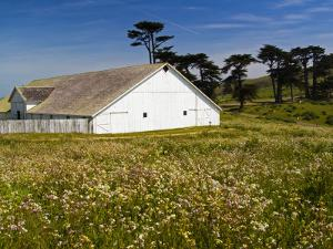 Historic Farm House Surrounded by Wildflowers at End of Pierce Point Road by Emily Riddell
