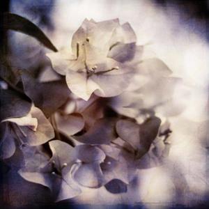 Purple Dusk I by Emily Robinson