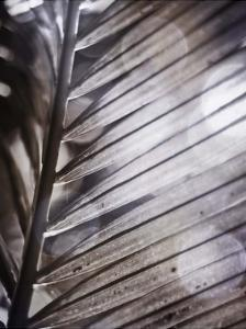 Silvery Frond II by Emily Robinson