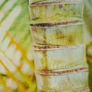 Tropical Texture II by Emily Robinson