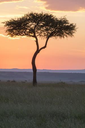 Africa, Kenya, Masai Mara National Reserve. Sunset over tree.
