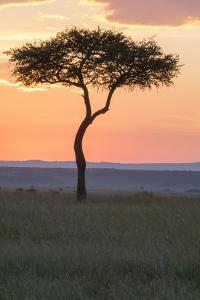 Africa, Kenya, Masai Mara National Reserve. Sunset over tree. by Emily Wilson