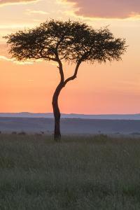 Africa, Kenya, Masai Mara National Reserve. Sunset over tree. by Emily Wilson