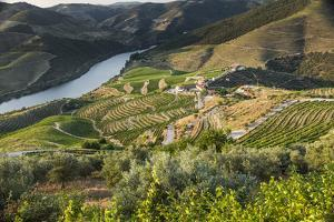 Douro Valley, Douro River, Porto. Valley Is Lined with Steeply Sloping Hills and Vineyards by Emily Wilson