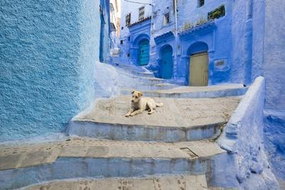 Morocco. Blue Narrow Streets and Neighborhooda of Chaouen