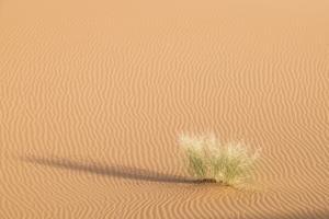 Morocco. Erg Chegaga Is a Saharan Sand Dune by Emily Wilson