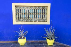 Morocco, Marrakech, Potted Succulent Plants Outside a Blue Building by Emily Wilson