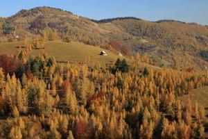 Romania, Transylvania, Carpathian Mountains, Magura, Fall Colors. by Emily Wilson