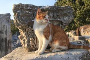 Turkey, Izmir, Selcuk, Cat in the ruins of Ephesus by Emily Wilson