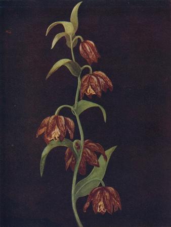'Mission Bells',  c1915, (1915)