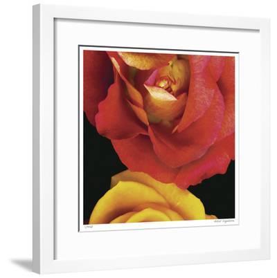 Emma's Roses-Pip Bloomfield-Framed Giclee Print