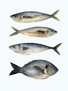 Four Fish I by Emma Scarvey