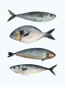 Four Fish II by Emma Scarvey