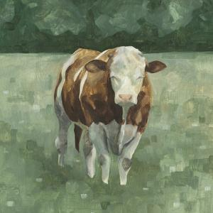 Hereford Cattle II by Emma Scarvey