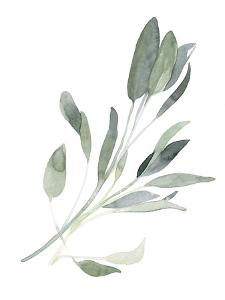 Simple Sage I by Emma Scarvey