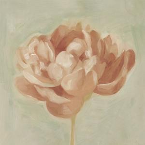 Spring Peony I by Emma Scarvey