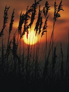 Seagrass Silhouetted at Sunset by Emory Kristof