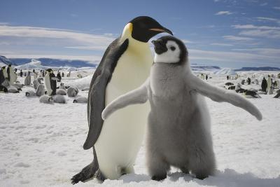Emperor Penguin and Chick in Antarctica-Paul Souders-Photographic Print