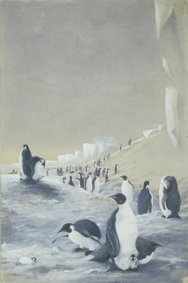 Emperor Penguin at Cape Crozier, Mar 28, 1911-Edward Adrian Wilson-Giclee Print