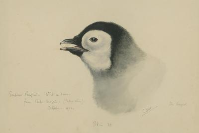 Emperor Penguin, Chick in Down, from Cape Crozier (Taken Alive), the Largest, Oct 1902-Edward Adrian Wilson-Giclee Print