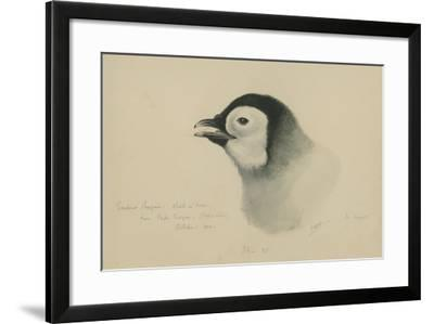 Emperor Penguin, Chick in Down, from Cape Crozier (Taken Alive), the Largest, Oct 1902-Edward Adrian Wilson-Framed Giclee Print