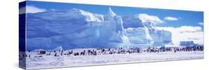 Emperor Penguin Colony, Ruser-Larsen Ice Shelf, Weddell Sea, Antarctica