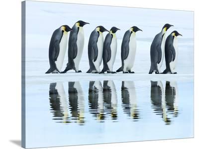Emperor penguin group, Antarctica-Frank Krahmer-Stretched Canvas Print