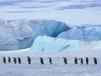 Emperor penguin group with iceberg-Frank Krahmer-Photographic Print