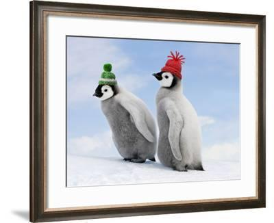 Emperor Penguin, Two Chicks with Woolly Hats--Framed Photographic Print