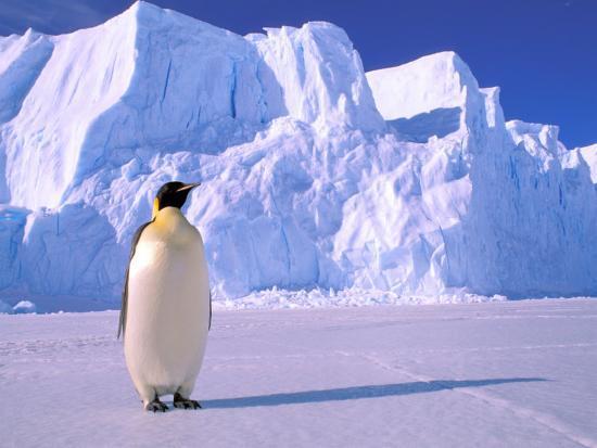 Emperor Penguins, Cape Darnley, Australian Antarctic Territory, Antarctica-Pete Oxford-Photographic Print
