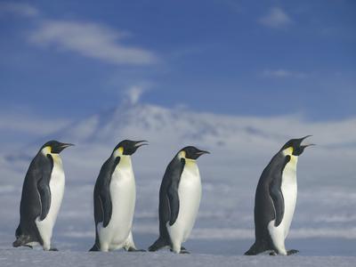https://imgc.artprintimages.com/img/print/emperor-penguins-walking_u-l-pzs9t80.jpg?p=0