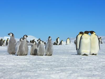 https://imgc.artprintimages.com/img/print/emperor-penguins_u-l-pzlii20.jpg?p=0