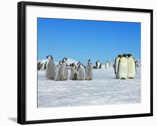 Emperor penguins-Frank Krahmer-Framed Photographic Print